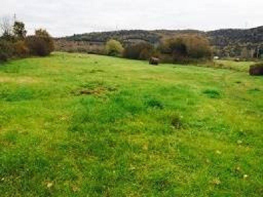 Terreno agricolo a Monteverdi Marittimo (2/5)