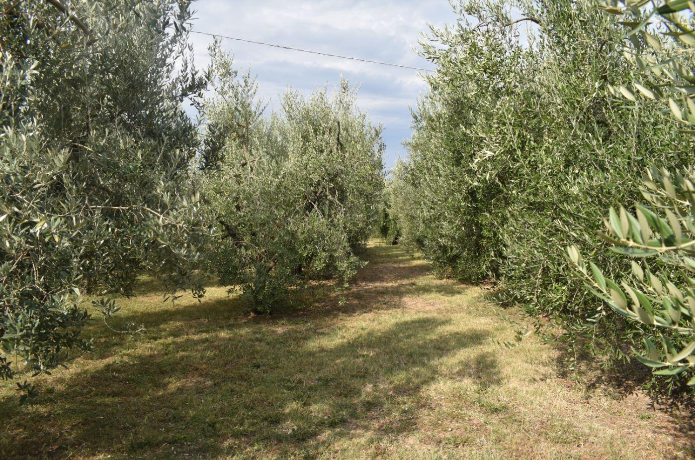 Terreno agricolo a Campiglia Marittima (1/1)